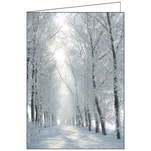 Collisons Frozen Trees Luxury Foil Christmas Cards - Pack of 10